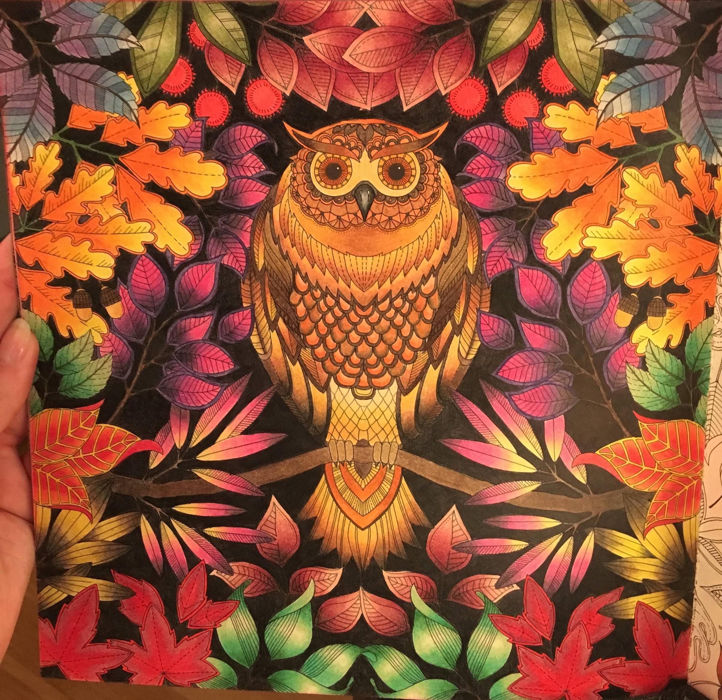 Colouring Coloring Adultcoloringin Inspiration My Version Of This Beautiful Owl Basford Secret Garden Johanna Basford Secret Garden Secret Garden Colouring