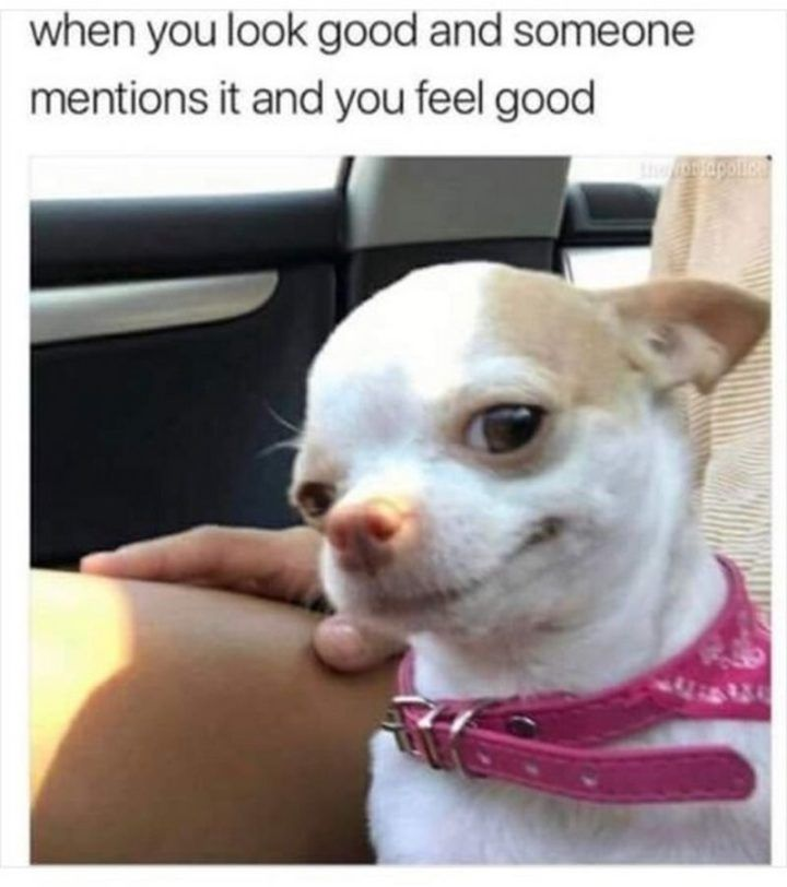 101 Smile Memes To Make Your Day Even Brighter Funny Dog Memes Funny Animals Animal Memes