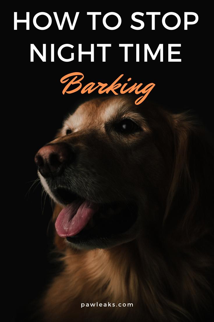 Why Do Dogs Bark At Night Dog Barking At Night Dog Barking Stop Dog Barking