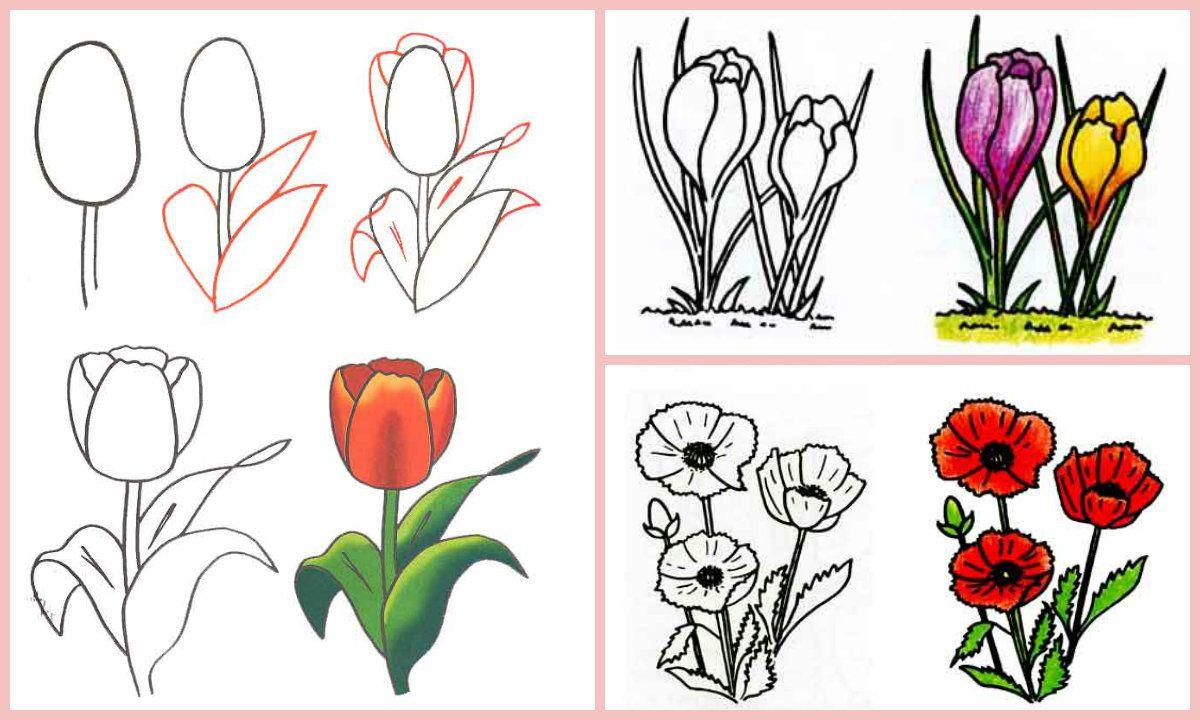 картинки как рисовать тюльпан мак землянику помогают поправить