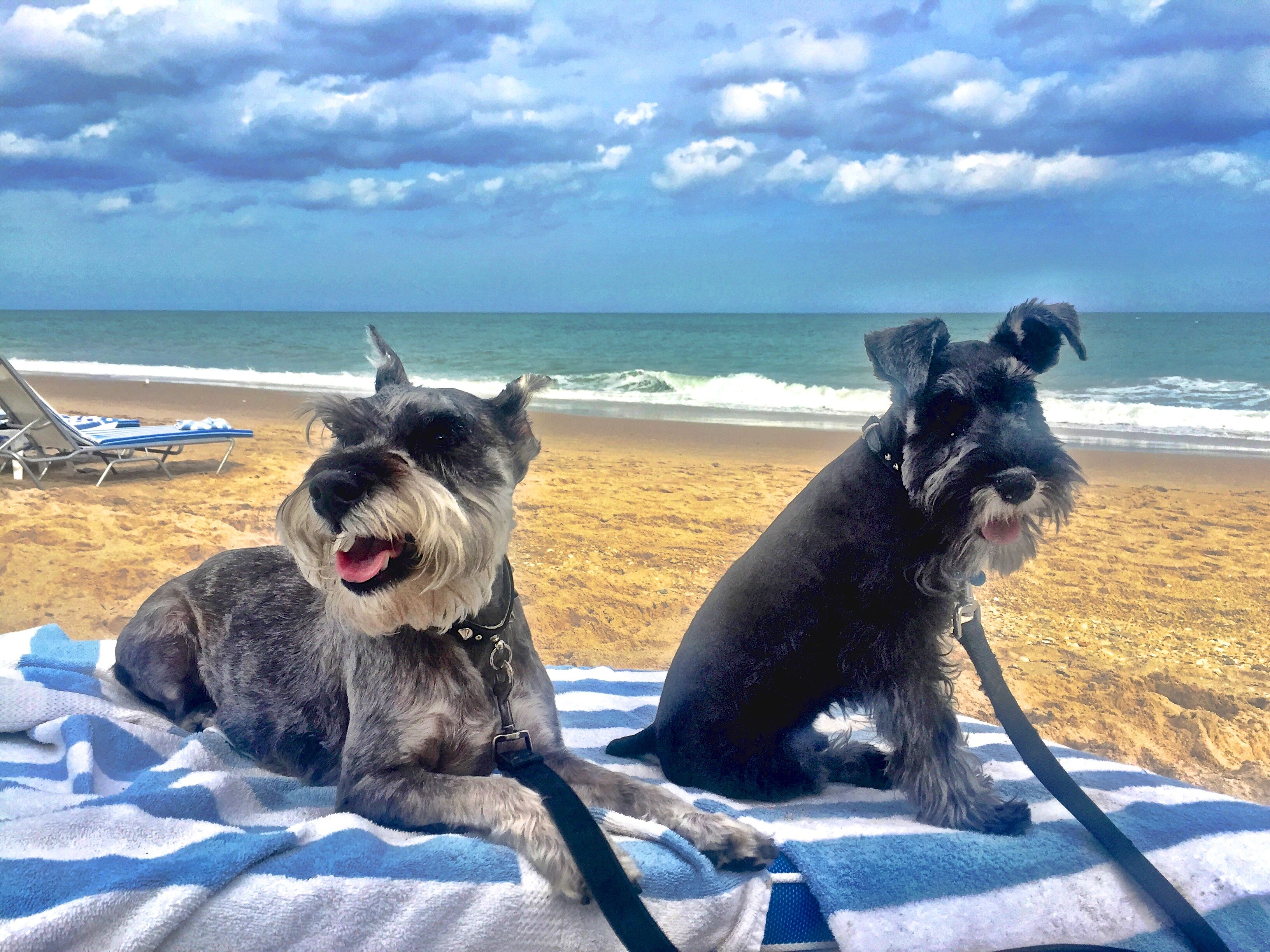 Pet Friendly Hotels In Florida In 2019 Room Accommodations At