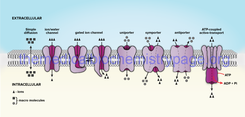 questions on cell membrane transport mechanisms A free review of cell membrane made of 34 intelligent questions with answers number 10 is very important  what is mass transport across the cell membrane  a cell that has expanded to this point is called a turgid cell cell membrane review - image diversity: plasmolysed cell flaccid cell turgid cell 32 what is the formula for the dpd.