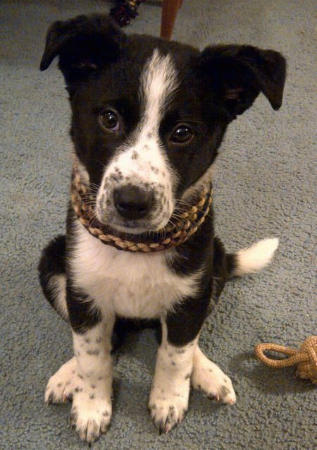 Black Together White Mix Black Cat Border Collie And And