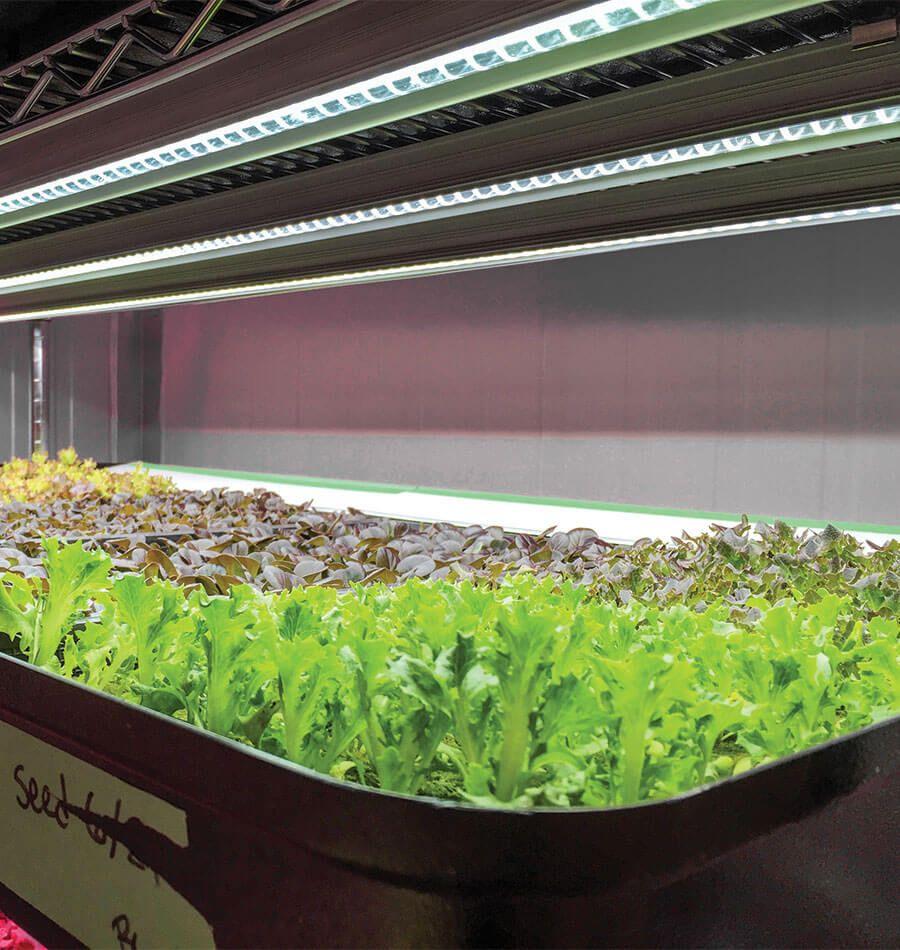 Best Indoor Grow Lights For Vegetables Indoor Grow 400 x 300