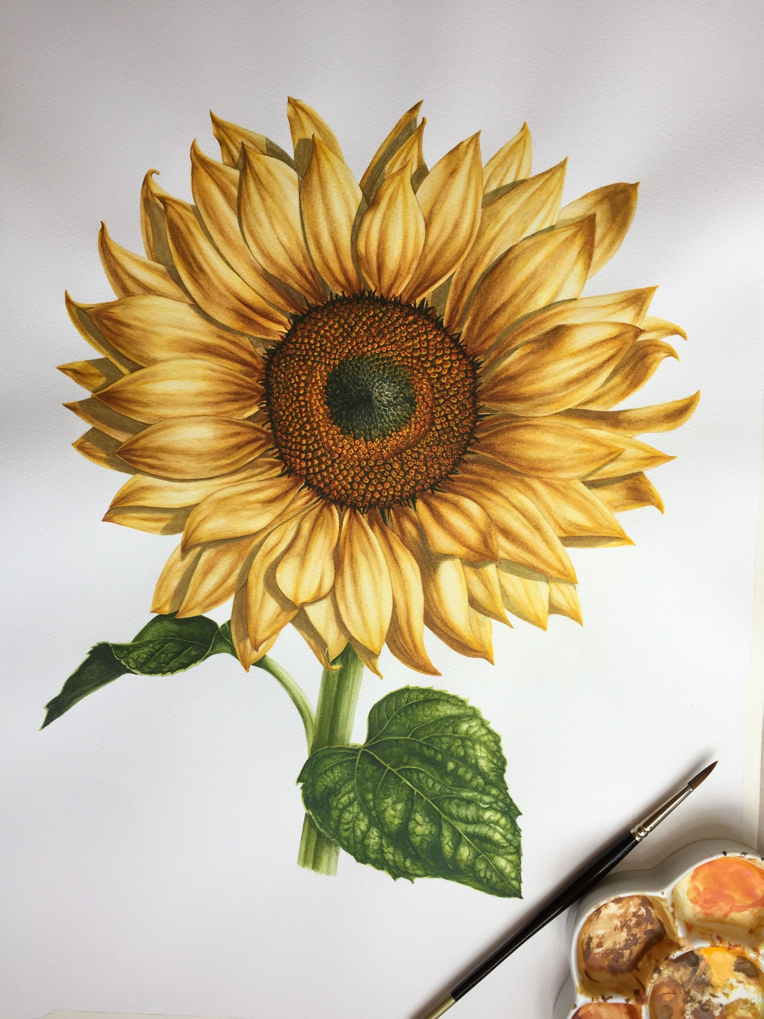 Sunflower In Watercolour By Anna Dowd Art Pieces Of Nature
