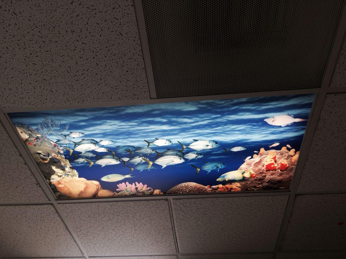 False Ceiling Aquarium From Artificial Sky Sky Ceiling