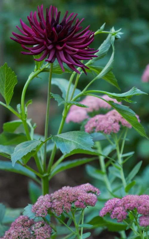 Photo of Combinazione di fiori autunnali I Love | Hammer and Hoe # combinazione #fall #flower #hamme …