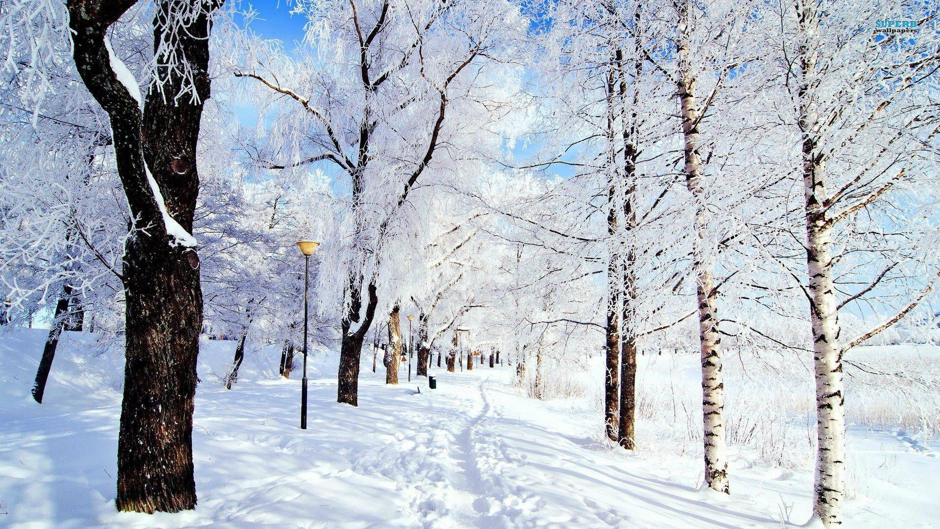 Cool Wallpaper Love Winter - f07bc63b9524b1b1aab5a6557f8637cc  You Should Have_893629.jpg