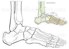 How To Draw Skeleton Feet Google Search Foot Bone Anatomy Make Art Drawings