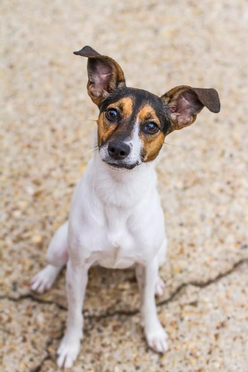 Adopt Annalise On Pets In Need Of A Home Adoption Dogs Pets