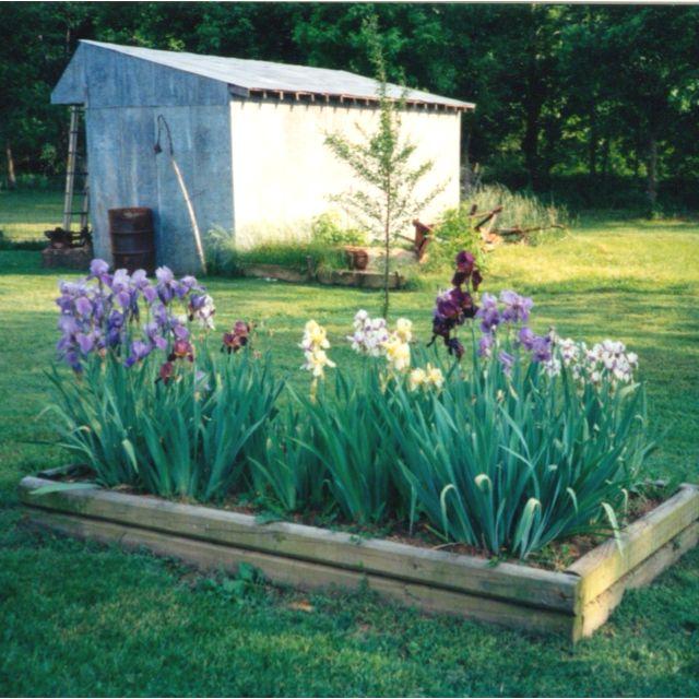 Pin By Lorie Vaughn On Gardening Iris Garden Growing Irises Garden Inspiration