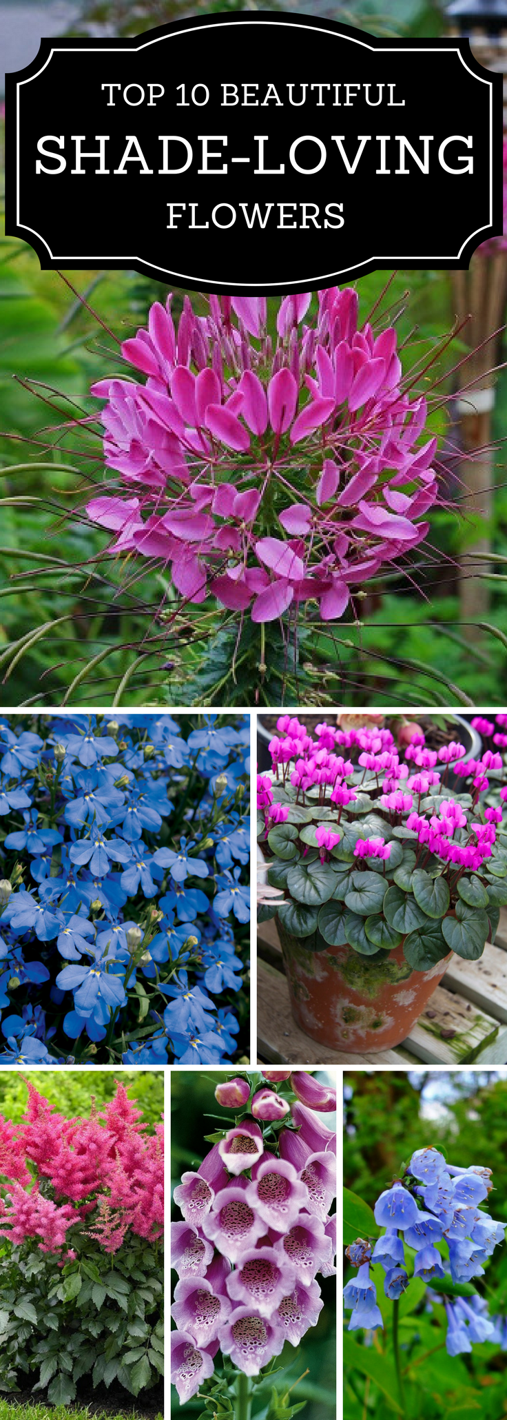 Top beautiful shade loving flowers drought tolerant plants