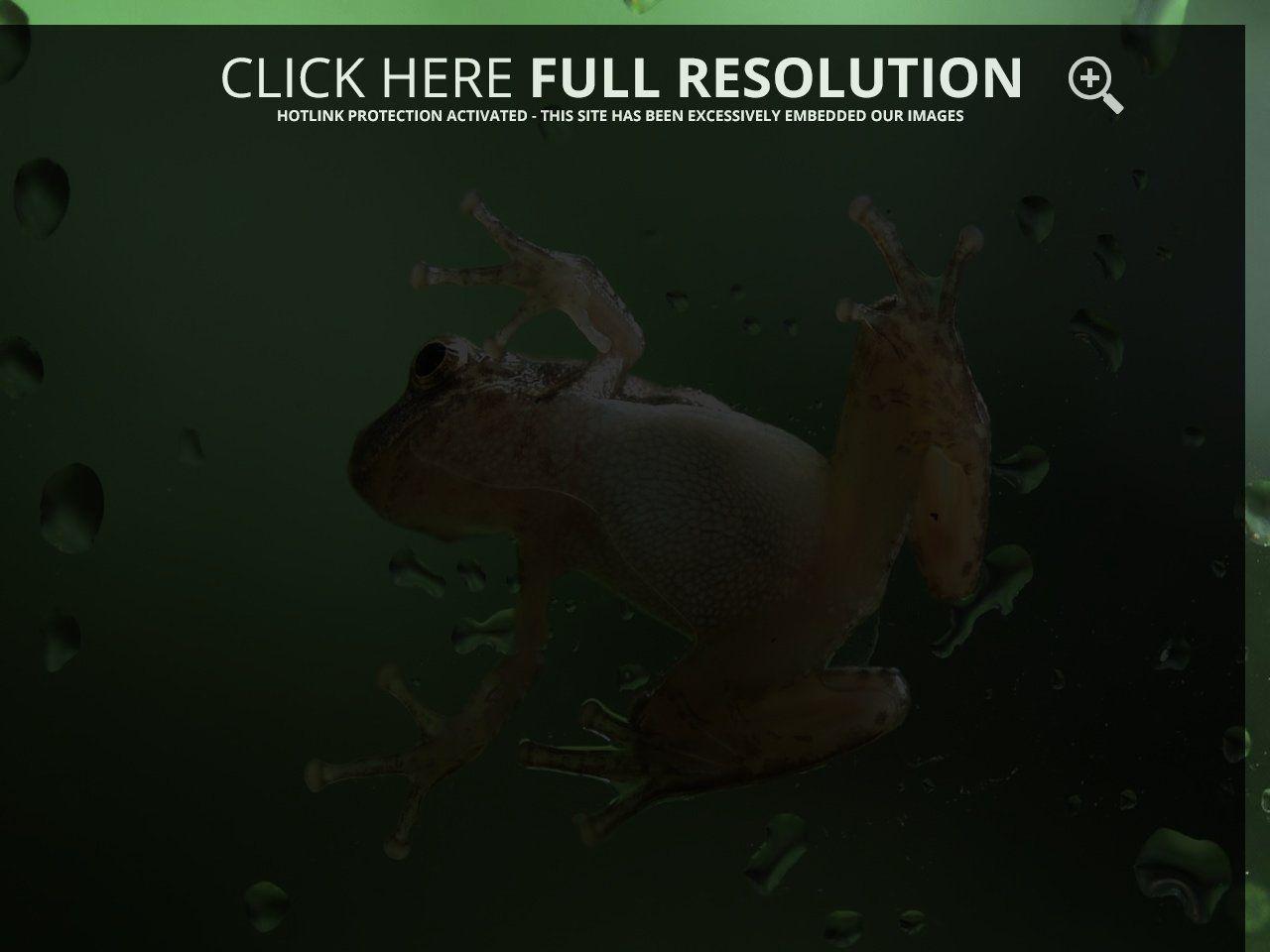 frog-on-glass.jpg (1280×960)
