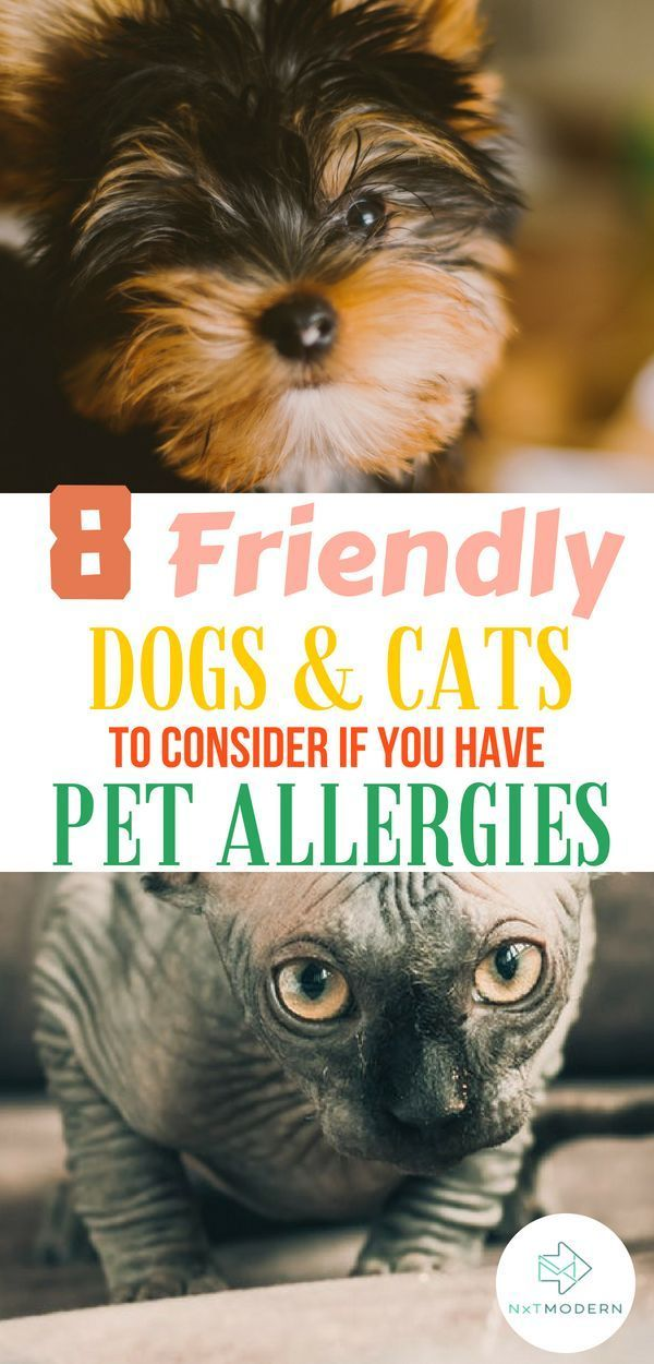 8 Great Pets For People With Pet Allergies Pet allergies