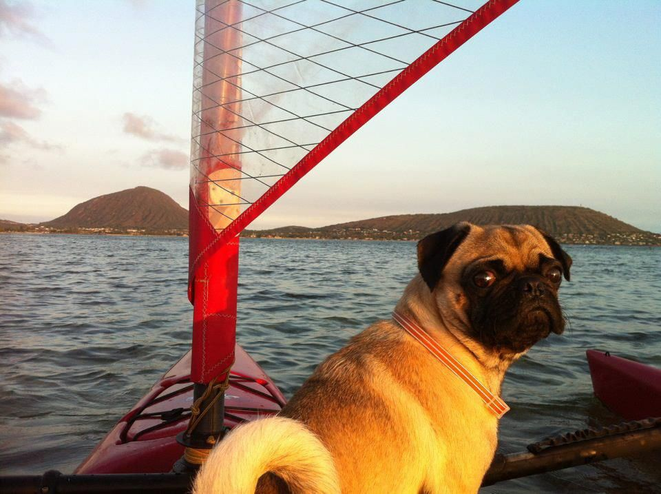 This little guy wants to know where the captain is headed