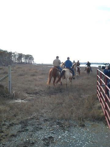 Spring Pony Roundup by the Chincoteague Volunteer Fire Department