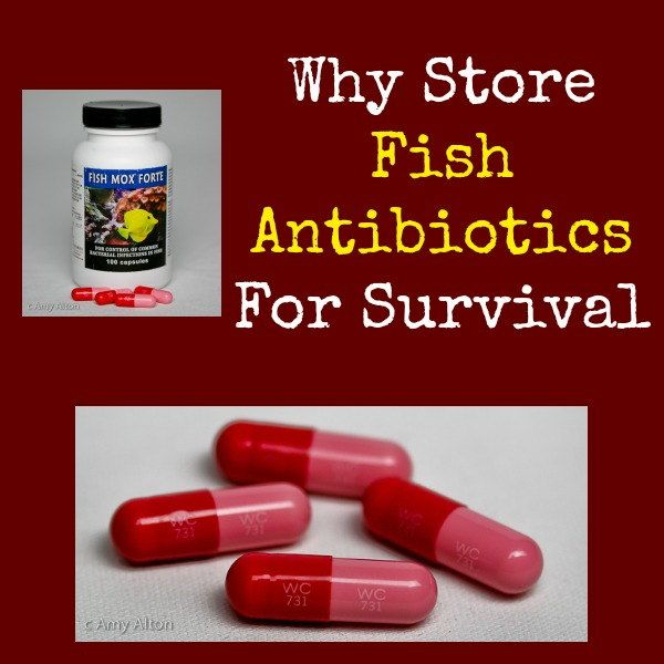 Why store fish antibiotics for survival survival kits for Erythromycin for fish