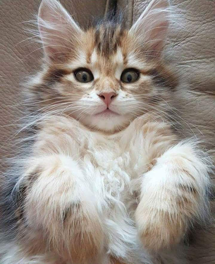 Pin on cats and other pics
