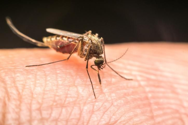 5 remèdes naturels contre les piqûres d'insectes   – piqûre
