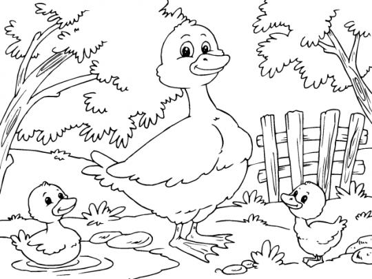 Pato Para Colorear Niños Adult Coloring Character Y Color