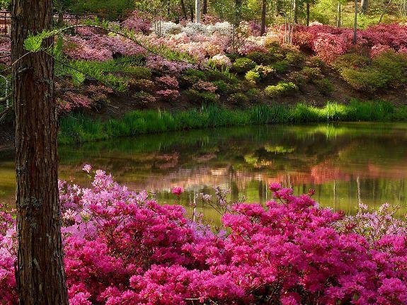 Flower garden spring photo beautiful pinterest spring photos flower garden spring photo mightylinksfo Images