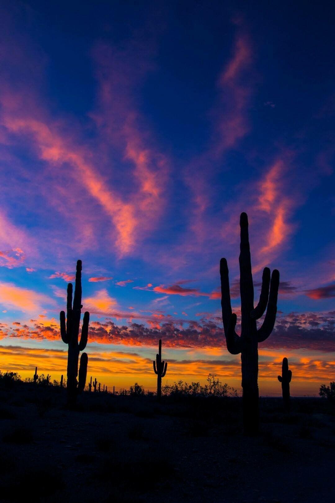 Arizona Night Sky Photograph by Amy Chesnut