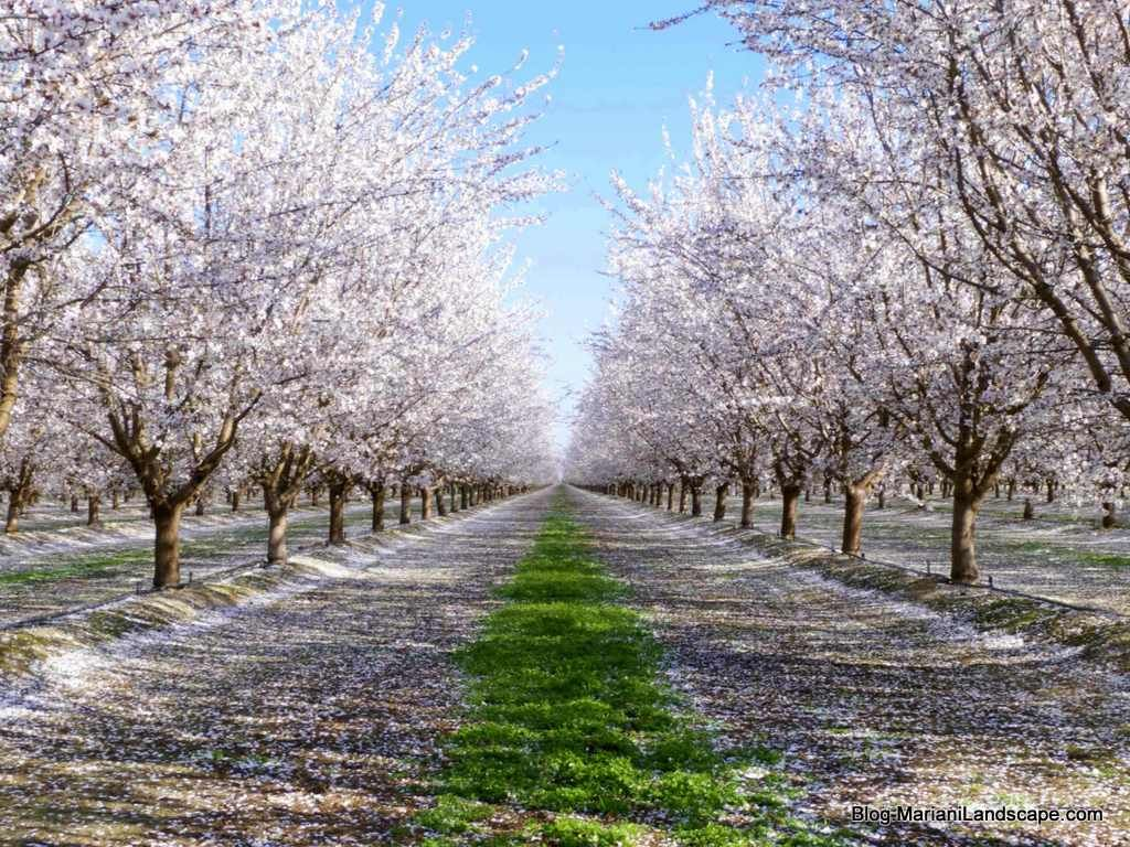 More Than Nuts Farm Gardens Bloom Beautiful Landscapes