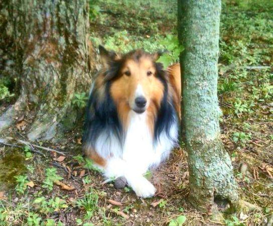 Lost reward 500Brooklyn Park area. Losing a pet, Pets
