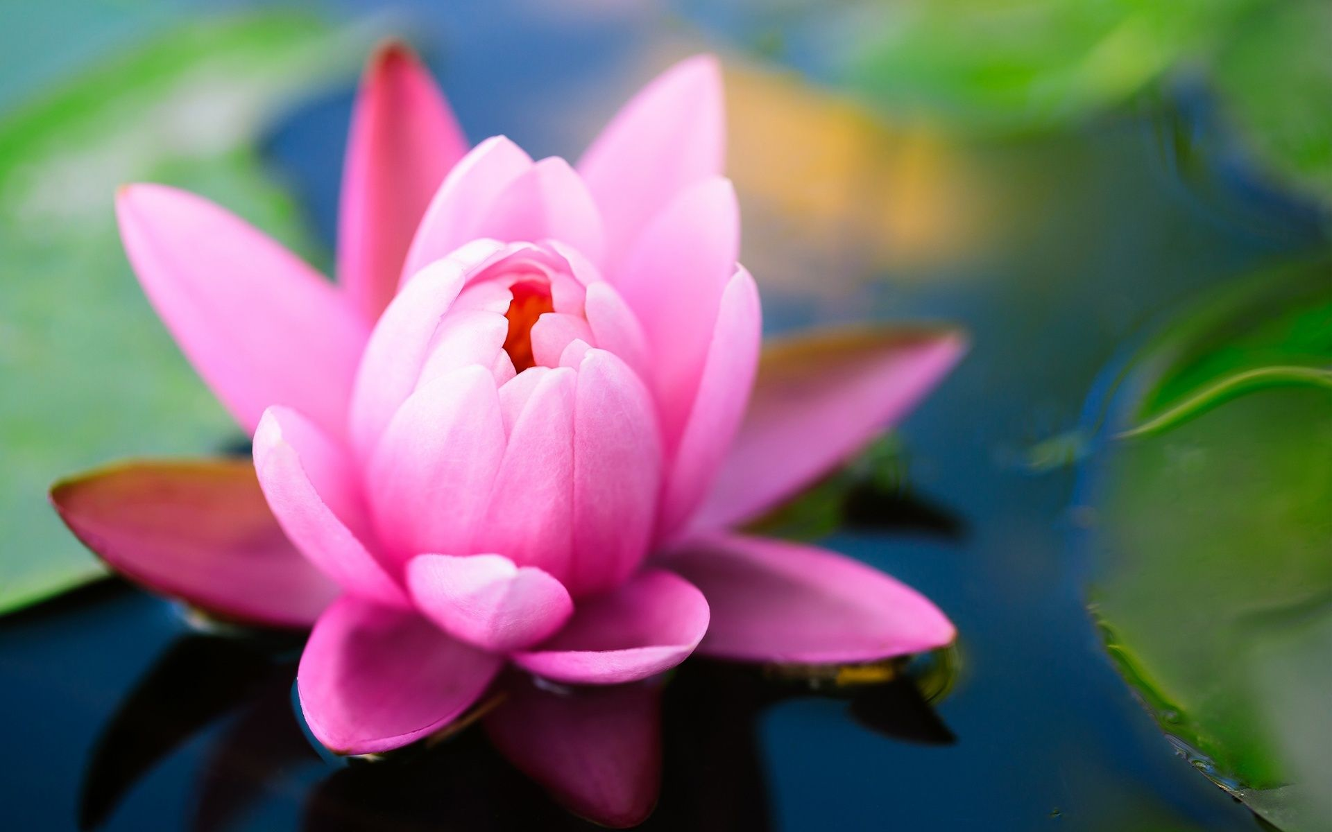 Lotus flowers wallpapers hd pictures one hd wallpaper pictures hd lotus flowers wallpapers hd pictures one hd wallpaper pictures mightylinksfo