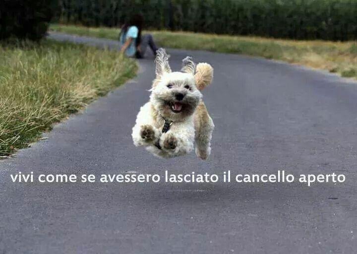 La semplicità dei cani :)