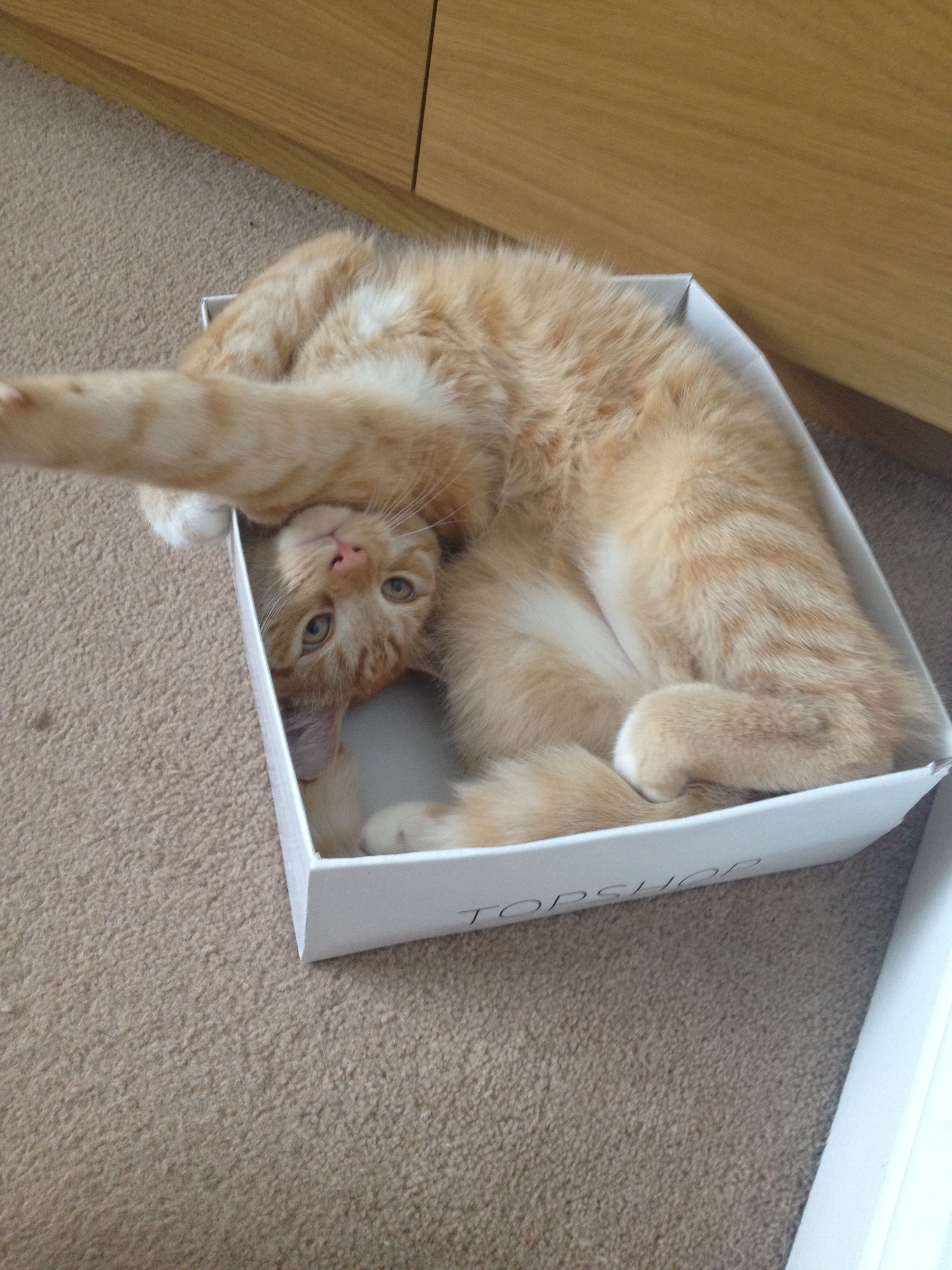 "Crazy kitty...""could I try the next size of box please"