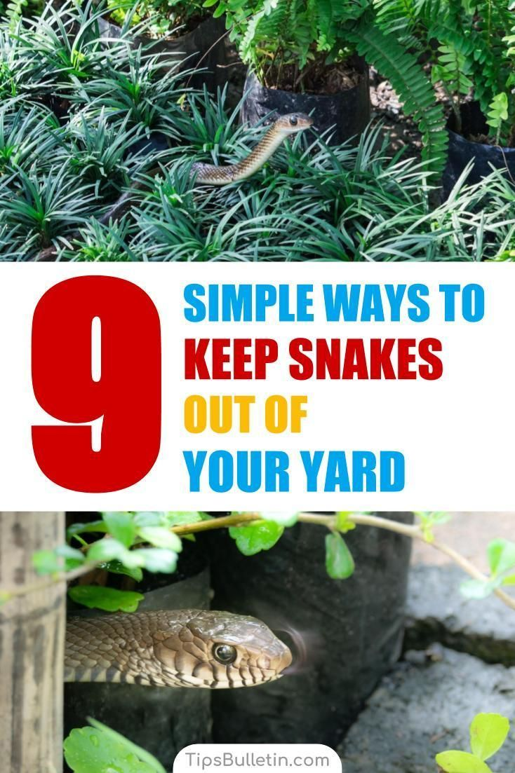 9 Simple Ways to Keep Snakes Out of Your Yard - How to ...
