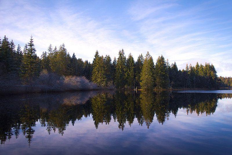 Almost Winter sur l'étang de Gruère