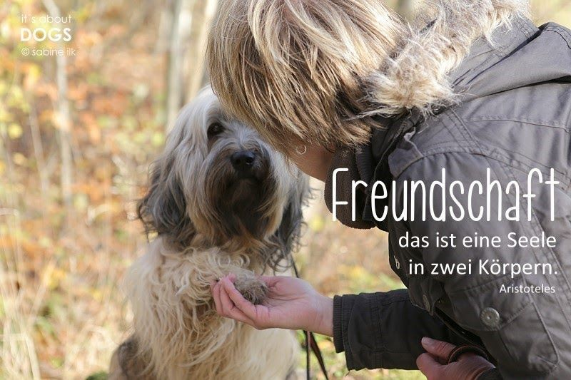 Hundeblog it´s about DOGS and Chiru: WAS IST EIN