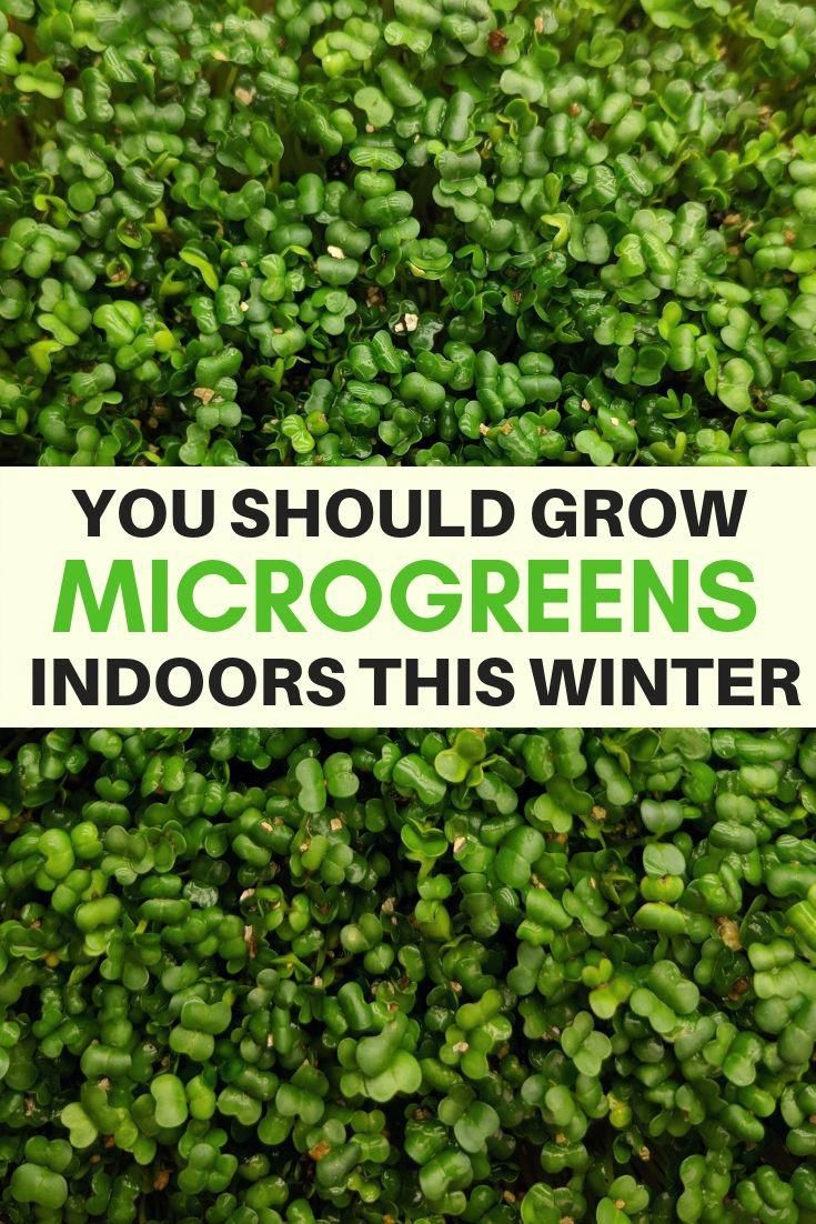 Indoor gardening for everyone! Microgreens are super easy