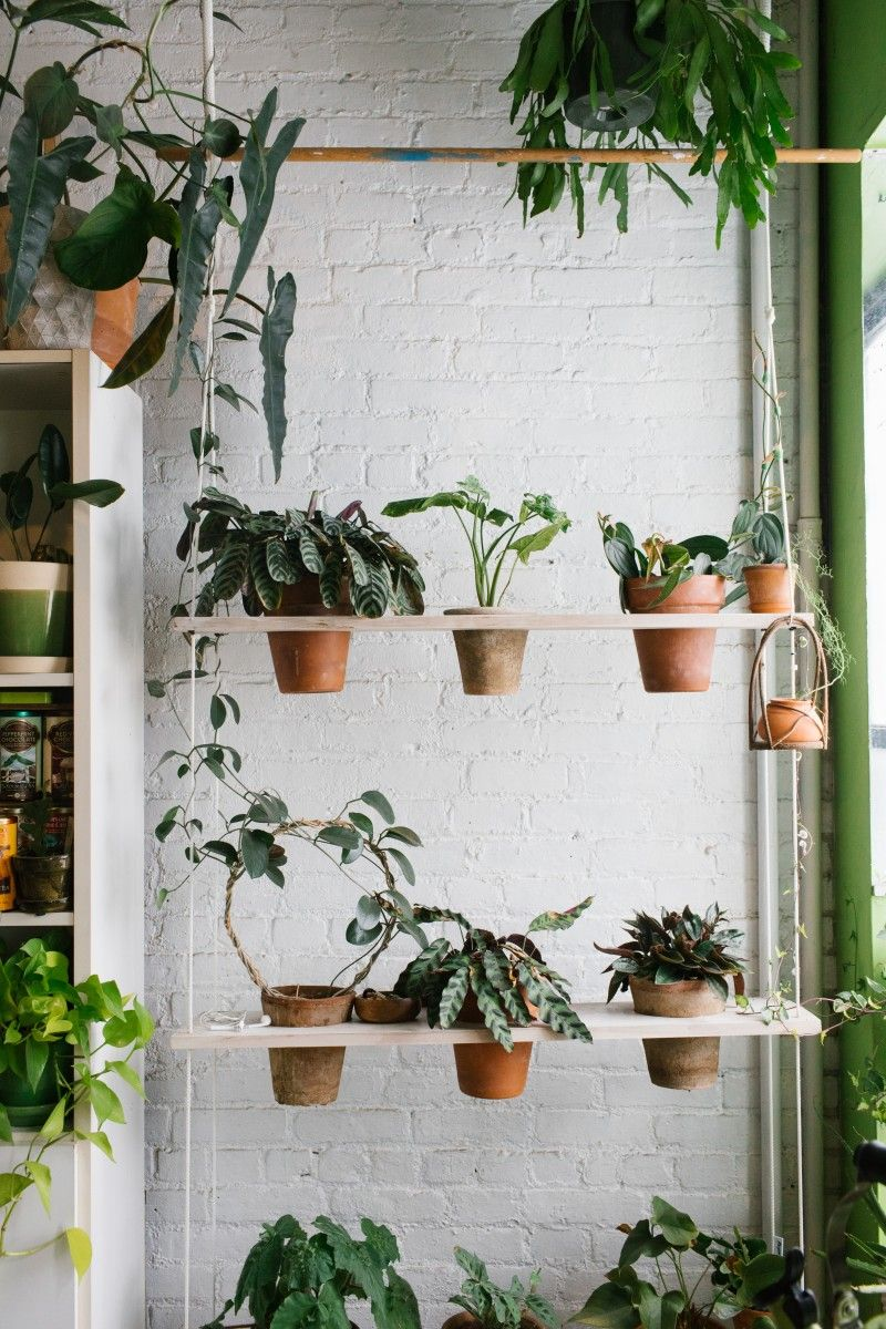 Take A Look Inside The Best Plant Instagram Accounts Plants House Plant Care Cool Plants