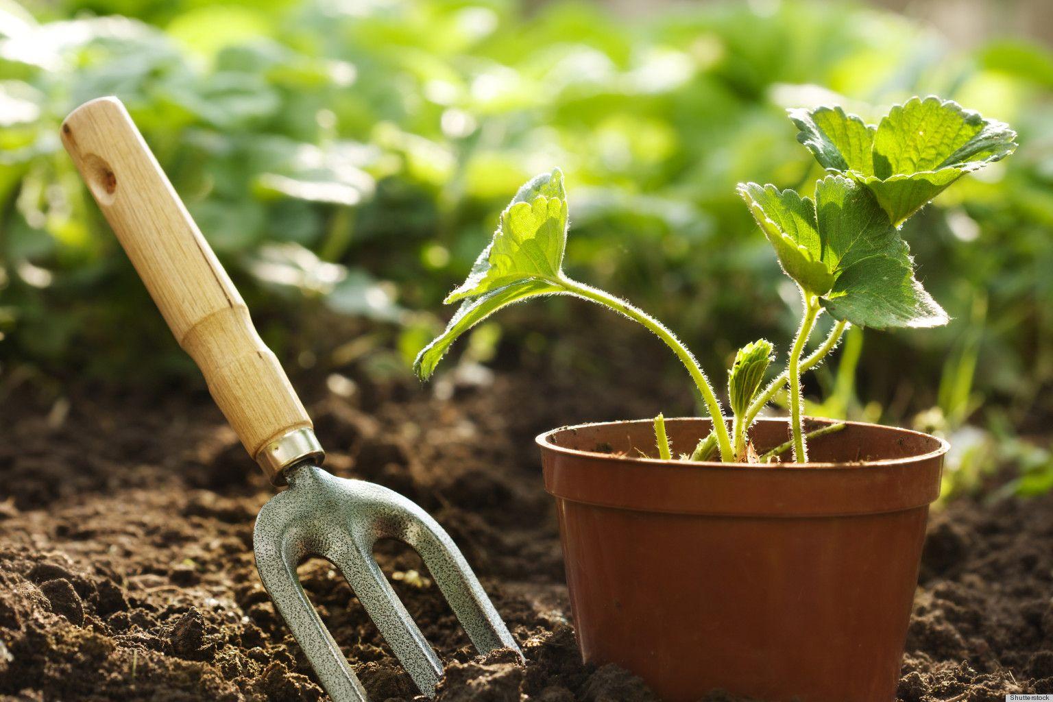 The Absolute Best Gardening Tools   Gardens, Organic gardening and ...