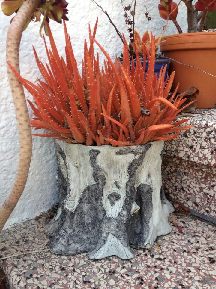 Pin de Melissa Quiroz en Incredible Plants | Suculentas ...