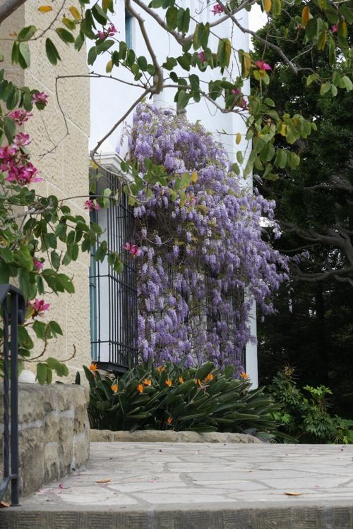 I Need A Little Wisteria In My Yard Dream Garden Wisteria Planting Flowers