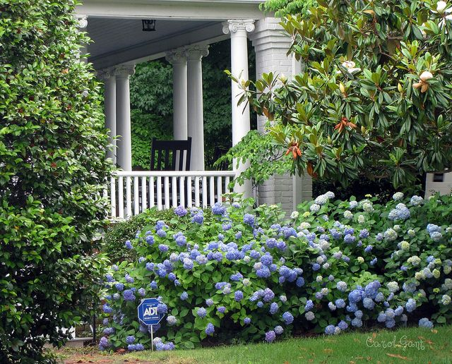 southern porch landscaping