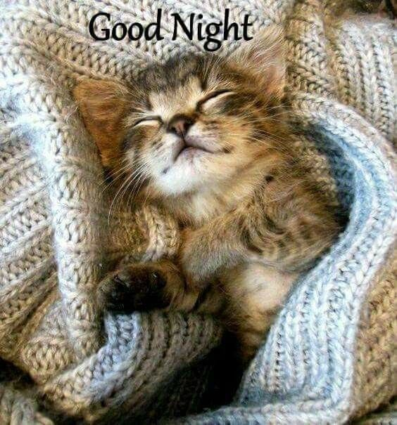 Good Night Sweet Dreams Tap The Link Now To See All Of Our Cool Cat Collections Beautiful Cats Kittens Cutest Kittens