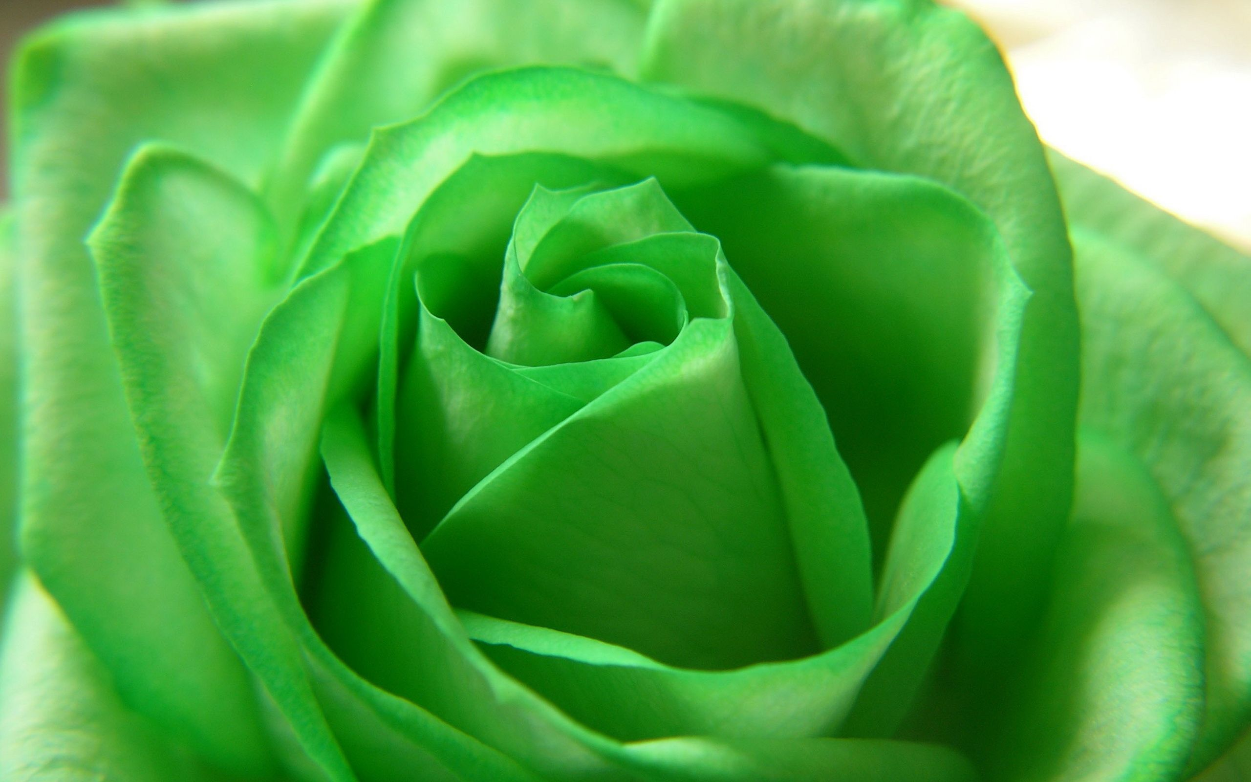 Green Flowers Wallpapers
