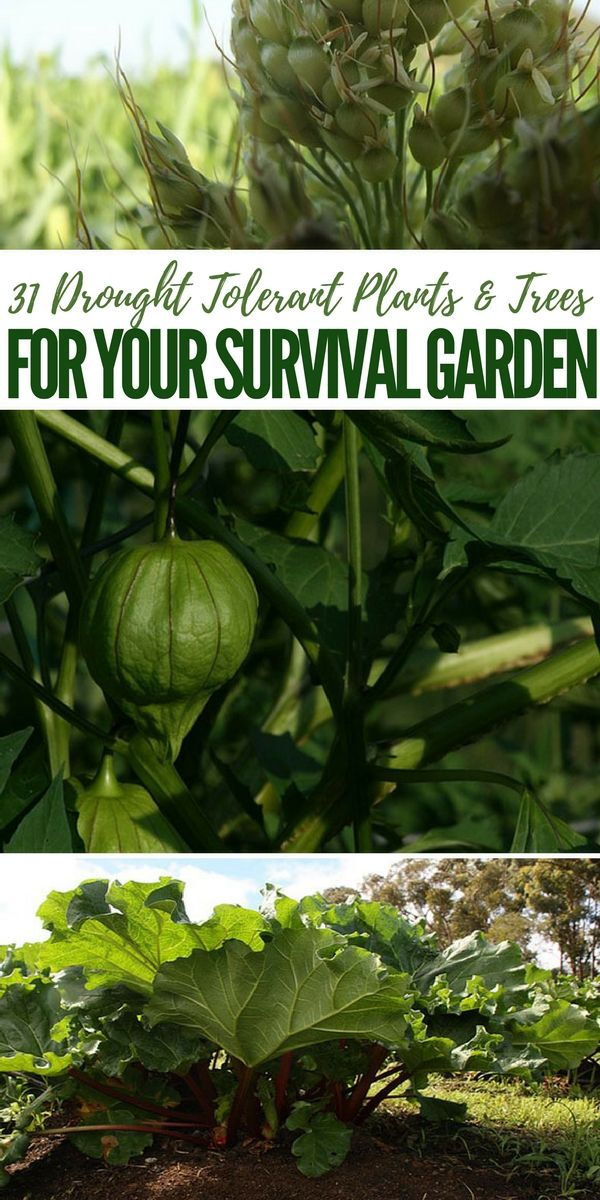 31 Drought Tolerant Plants & Trees for Your Survival Garden -   12 plants Home drought tolerant ideas