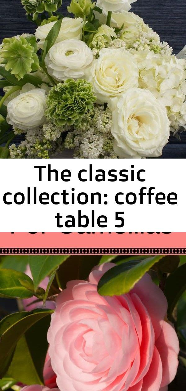 The classic collection coffee table 5 Learn how to care for camellias and enjoy them in pots or in hedges by adding them to your landscape See lots of camellias of all co...