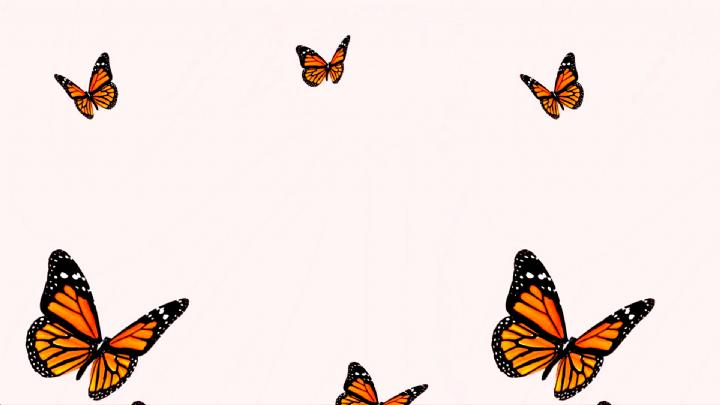 Butterflies Computer Background 3 2 Pink Orange Cute Butterfly Freedom In 2020 Cute Desktop Wallpaper Computer Wallpaper Desktop Wallpapers Aesthetic Desktop Wallpaper
