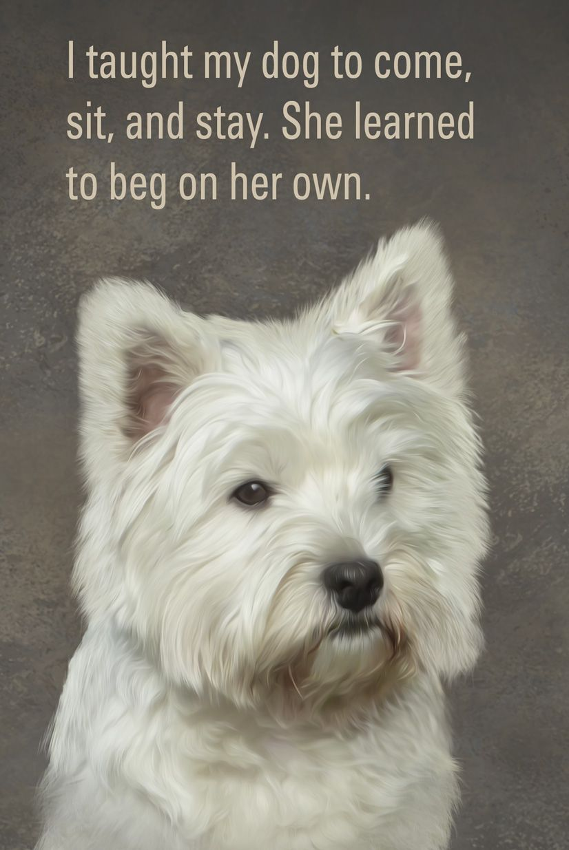 Everyone Loves The Lovable Westie See Move Special Pets At Https Www Etsy Com Listing 222538103 Custom Pet Portrai Custom Pet Portraits Pets Pet Portraits