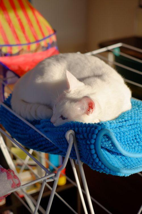 cat ねこごち↑1日1回のクリックがランキングに反映する仕組みです。今日も楽しんで頂けたら、チャーへのクリックお願いします。