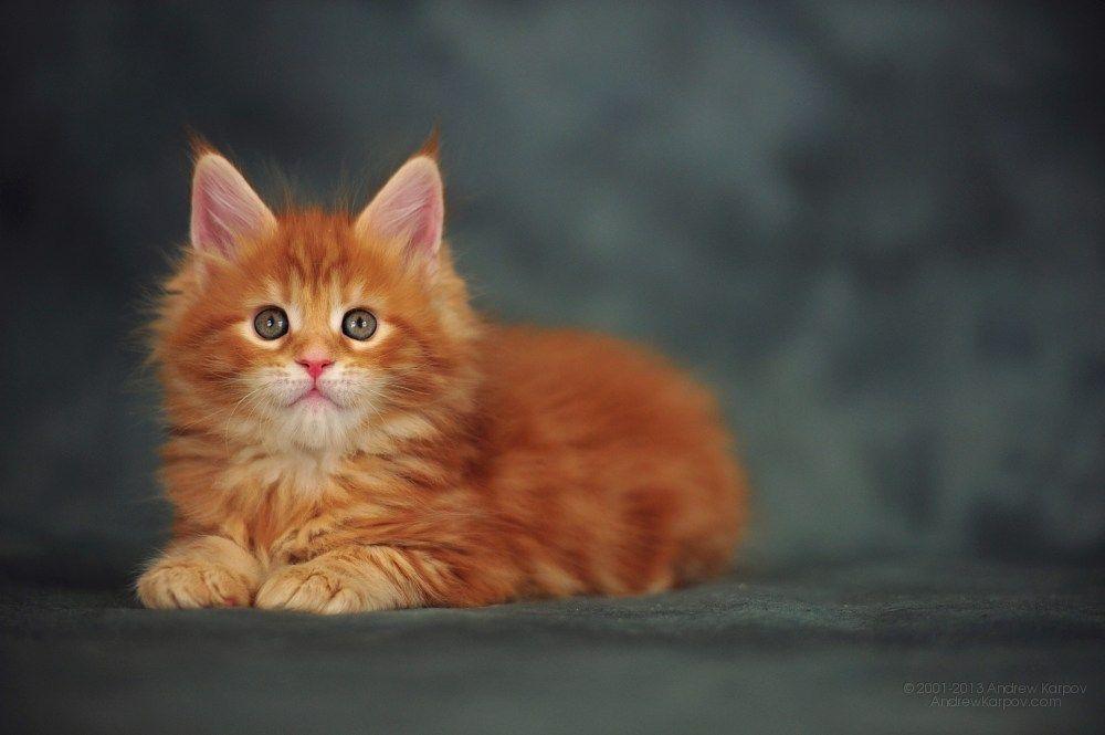 Park Art|My WordPress Blog_Maine Coon Kittens For Sale In Massachusetts