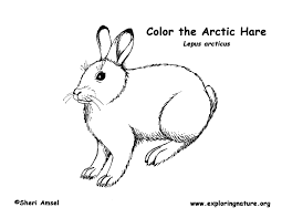 arctic fox coloring page Google Search Native American