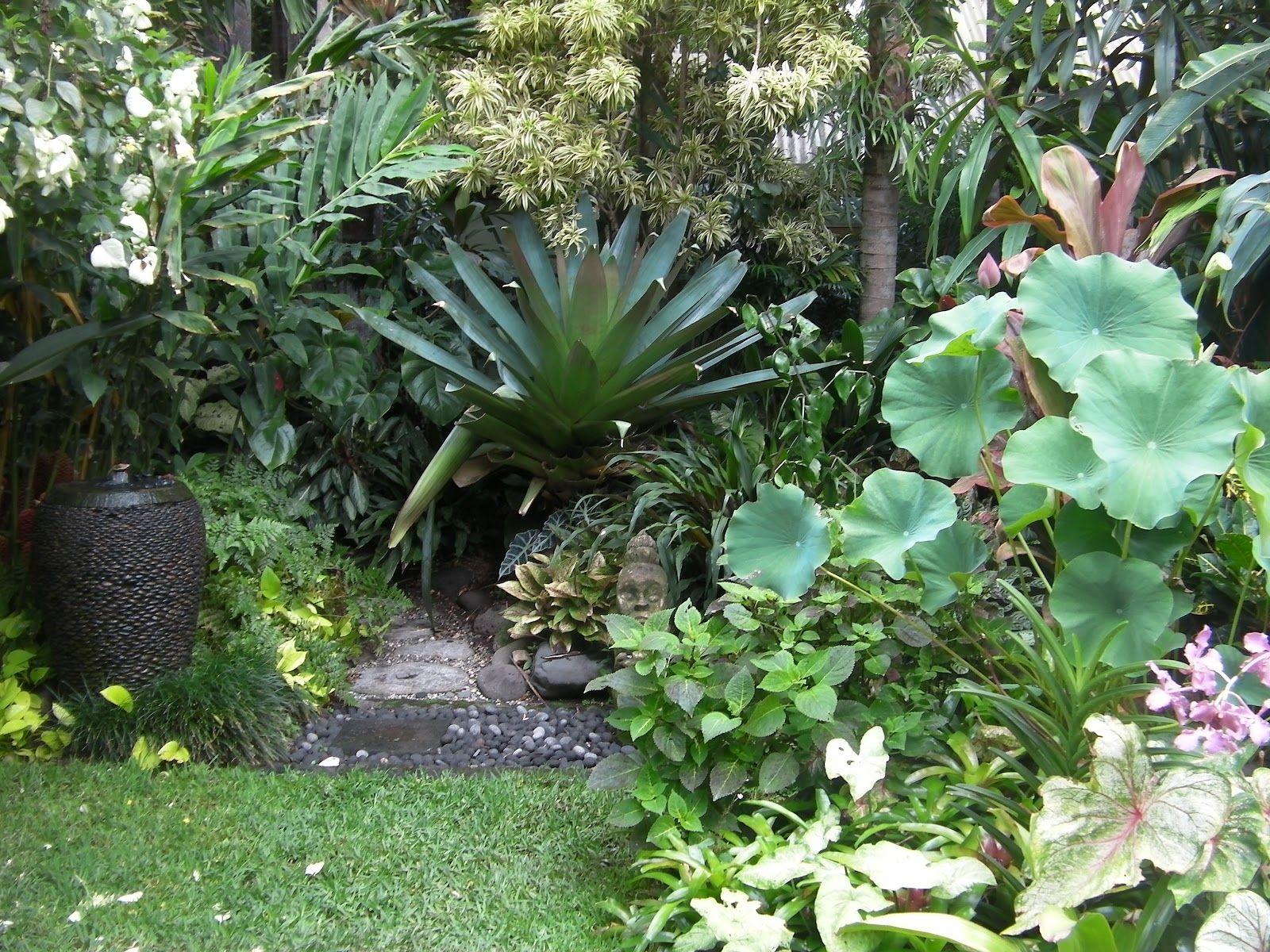How to create a tropical garden - Tropical Garden Ideas To Create His Ambling Trail Through Glorious Tropical Garden